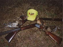 Hunting guns and birds - bird hunting woodcock and ruffed grouse accommodations in Phillips Wisconsin